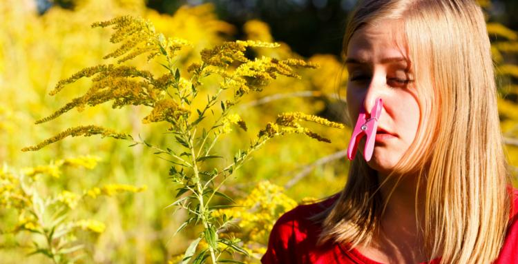 Herbal Tea Spring Allergies Josh Williams