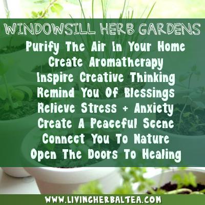 Living Herbal Tea 5.3