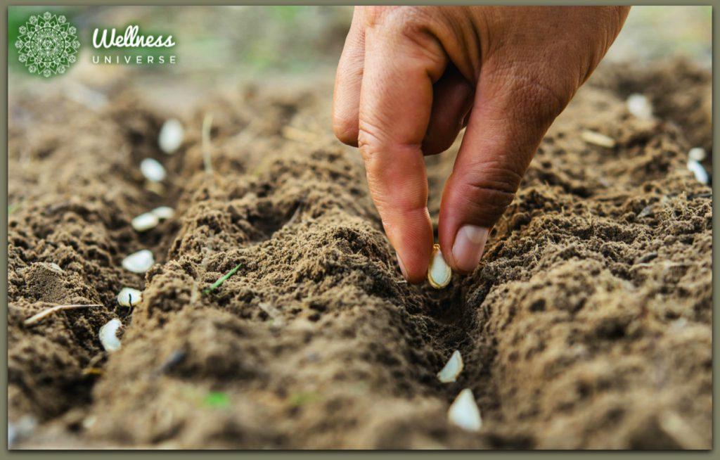 7 Steps to Regenerative Organic Landscaping by Aggie Perilli #TheWellnessUniverse #WUVIP #RegenerativeOrganicLandscaping